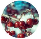 Sugar Tyme Winter Fruit