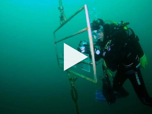 Ver video 'Ciencias y aventuras en el mar'