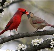 feeding each other