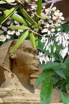 sphinx kanuka mingimingi rengarenga
