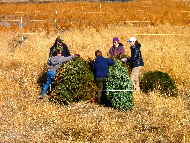 Workers placing Christmas trees in the newly constructed Cell 5AB