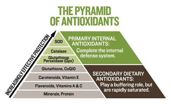 The Pyramid of Antioxidants