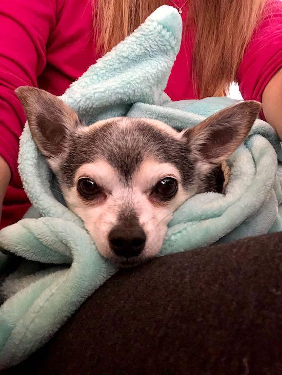 Ada's pup Pierce