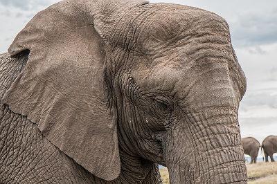 https://pixabay.com/de/elefant-stamm-hautpflege-gro%C3%9F-1526709/