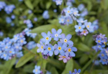 https://pixabay.com/de/bl%C3%BCte-flora-blumen-1840296/