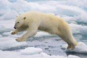 Vedecká kaviareň o klimatických zmenách | Café scientifique sur le changement climatique