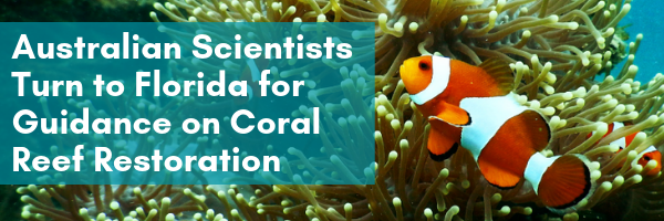 Australian Scientists turn to Florida for Guidance on Coral Reef Restoration