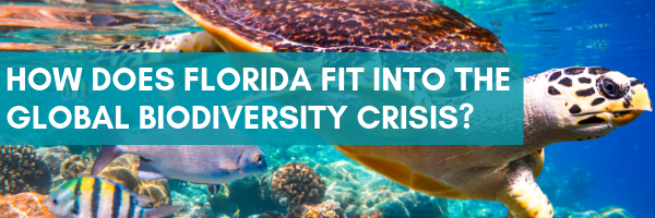 How does Florida fit into the global biodiversity crisis?