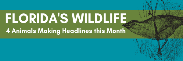 Florida's wildlife: 4 animals making headlines this month