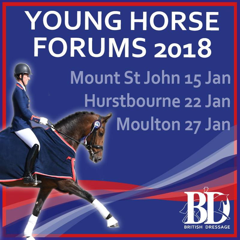 Young Horse Forum