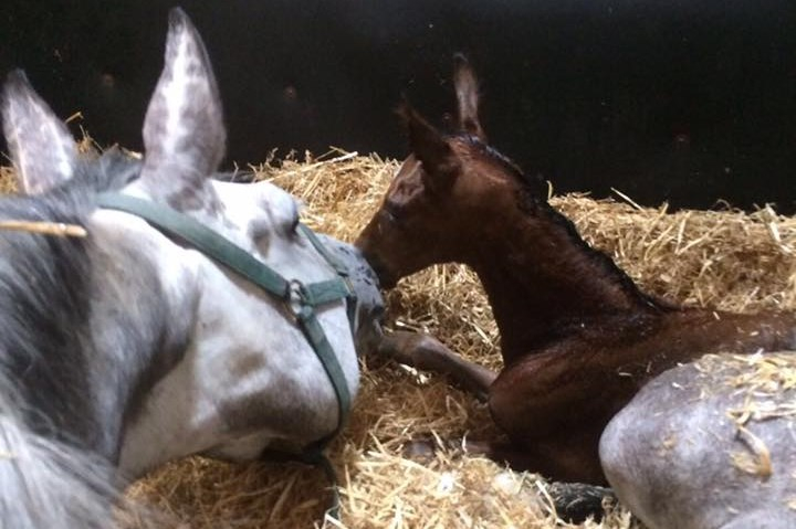 FERDEAUX FILLY AND RECIP