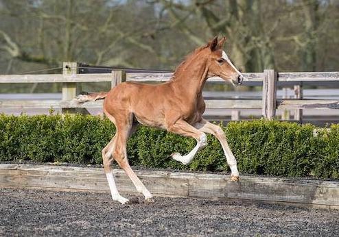 MSJ Foal