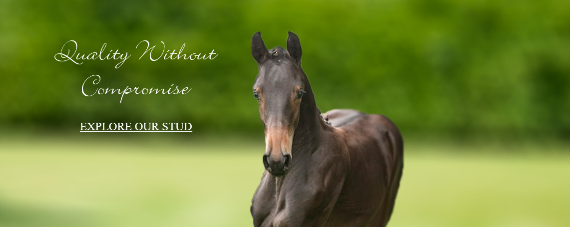 Mount St John Equestrian Website