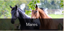 Mares at MSJ