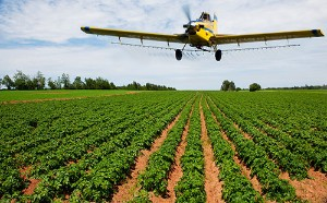 An airplane applies pesticides to a field.