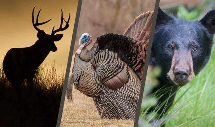 Hunting, Trapping, and Terrestrial Wildlife Proposed Regulations
