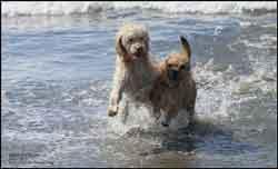 Eddie and Baxter