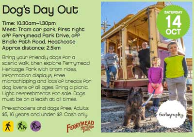 Dog Day Out Festival