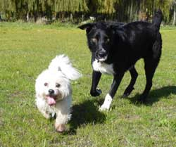 Rufoo and Buster at Porritt Park, our favourite park