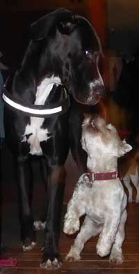 Stanley & Dougal