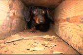 Earth Dog Trial