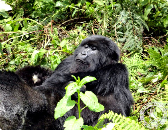 Hanging out with a new friend in Rwanda