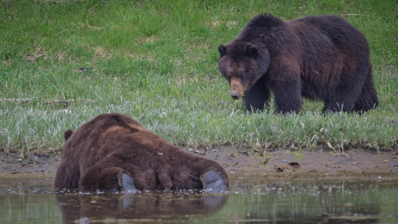 Pack Creek Bear Viewing 2021