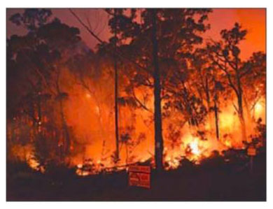 DELWP planned burn in East Gippsland