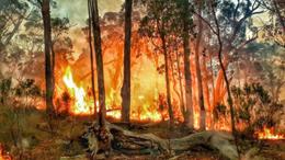 Planned Burn dargo Licola East Gippsland