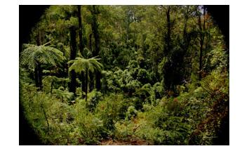 Kuark rainforest