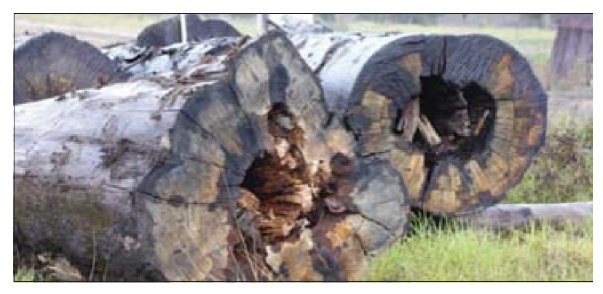 East Gippsland News 15-06-2016 - The lower class logs that Vic Forests assumes sawmills can make a viable business out of.