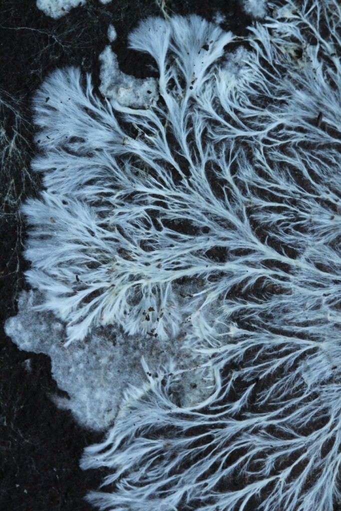 mycelium fungi forest