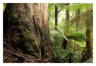 Old-growth forest has an important role to play in efforts to halt and reverse climate change