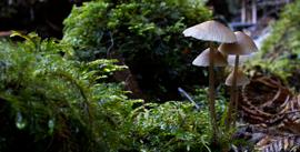 East Gippsland - Kuark forest fungi