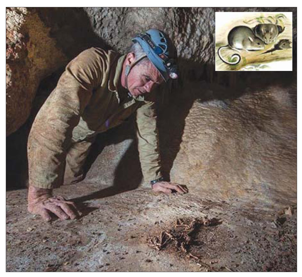 Cavers have solved a 40-year-old puzzle surrounding a strange fossilised animal found deep underground in a cave near Buchan.