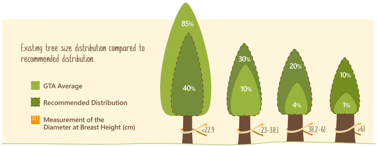 Tree size distribution in the GTA