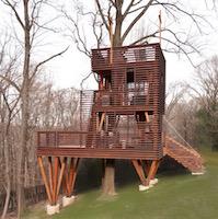 Spanish Cedar tree house