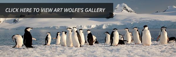 See Art Wolfe's Work