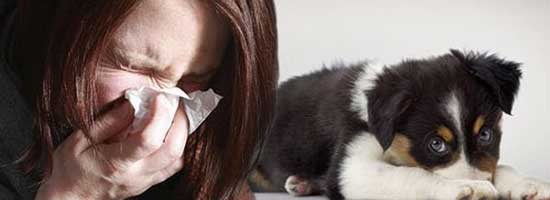QLD: Can a body corporate be allergic to pets?