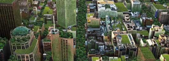 QLD: Green roofs