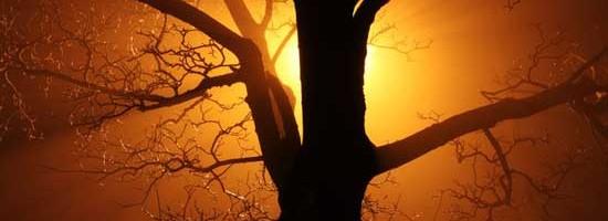 WA Dangerous Trees