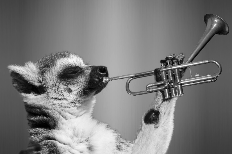 Animal blowing a trumpet - CC0 Public Domain