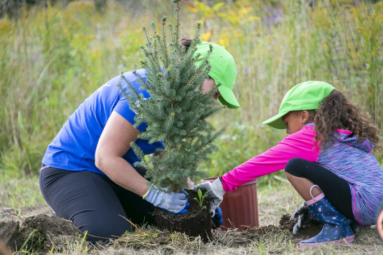 A woman and young girl plant an evergreen tree