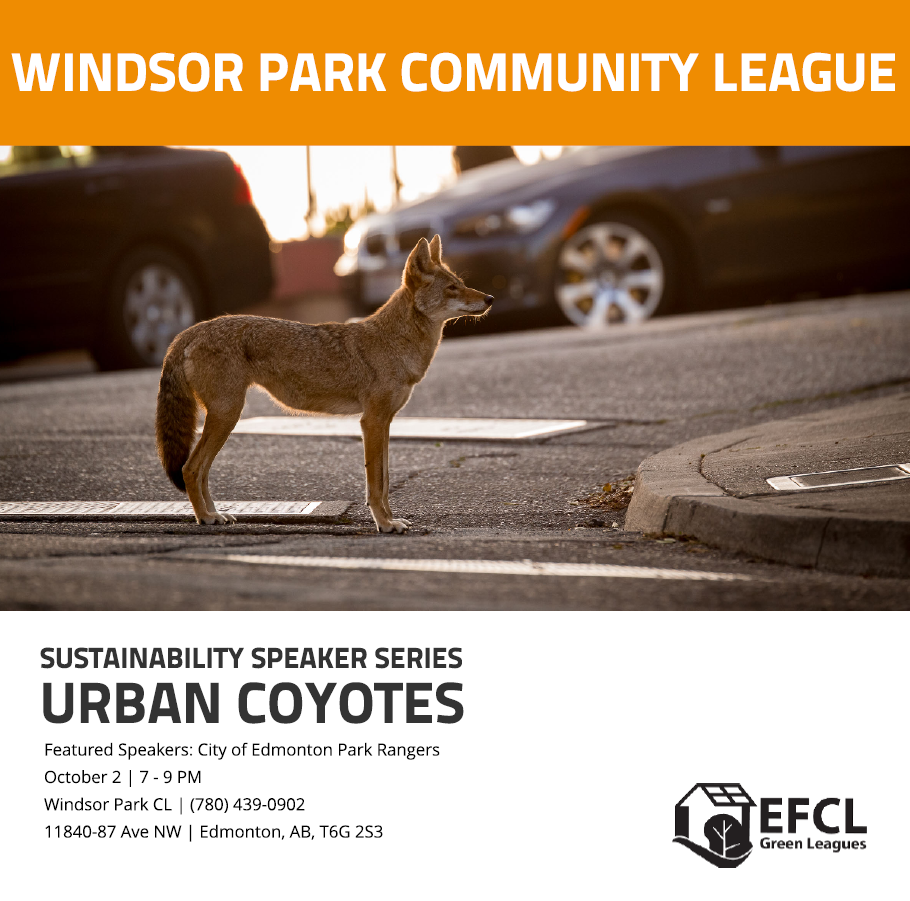 Windsor Park Community League presents Sustainability Speaker Series: Urban Coyotes with photo of coyote on city street