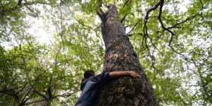 stop kappen van bomen