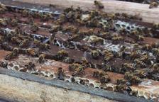 Roundup, een groot gevaar voor bijen