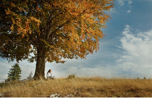 meditatie onder boom