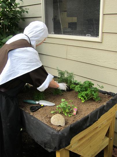 carmelite sister herb garden