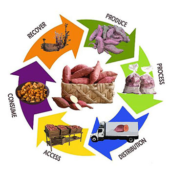 Food system diagram.