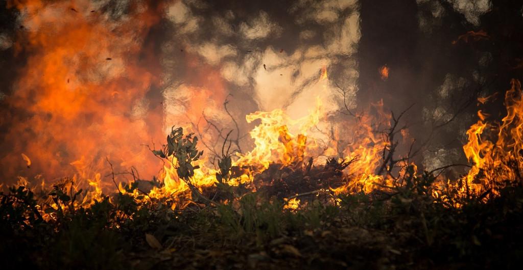 Los socialistas españoles proponen un debate de las gestiones del PPdeG (Feijóo) sobre los incendios en el Parlamento Europeo